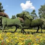 Soins naturels pour chevaux, chiens…