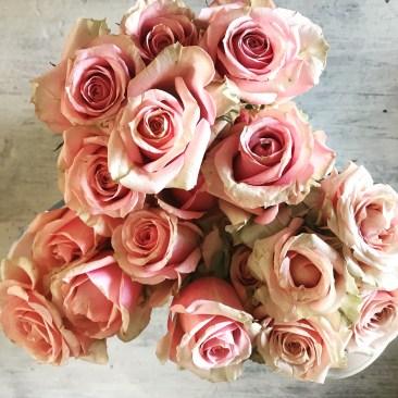 Pink Tea Roses