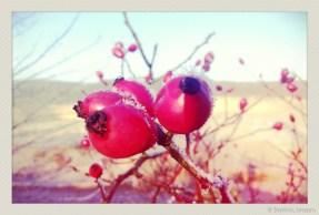 soja phonephotos-13198