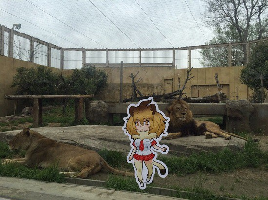 Kemono Friends teaming up with several zoos across Japan