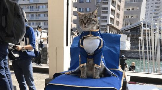 ufotable's Saber Cosplay Cat spreads cuteness during Machi Asobi