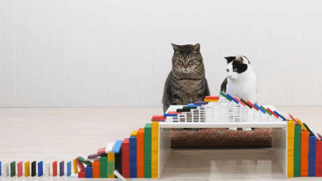 Stuck Inside? Watch these Japanese Cats Play with Dominos!