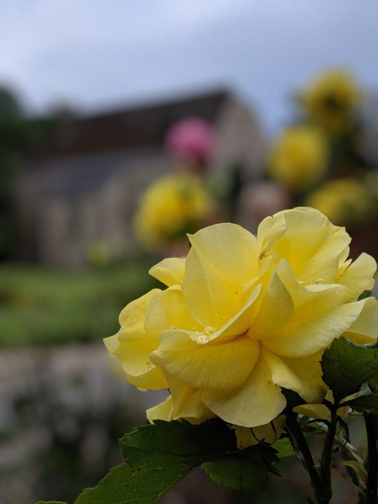 Jolie fleur aux Jardins d'Annevoie