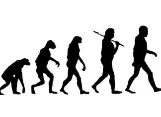 Эволюция человека