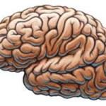 Происхождение человеческого разума