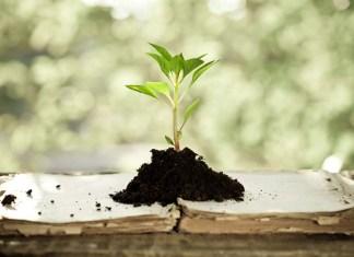 Добрая почва