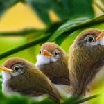 Пятый день творения: водные существа и птицы