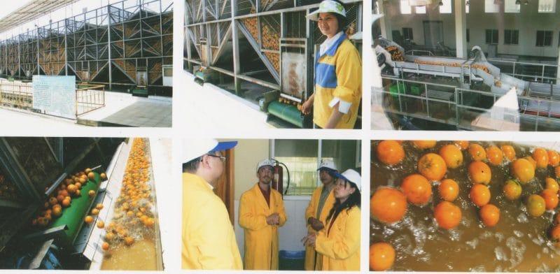 usine de jus d'orange dans le Sichuan en Chine, extraction du jus et de l'huile d'orange (D-Limonène)