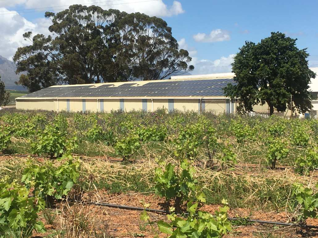 Solar Panels with vineyards