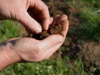 Improve Soil with Animals
