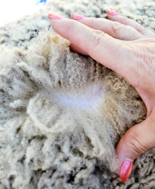 Covered Fleece 3-21
