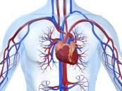Lesión de múltiples vasos y enfermedad carotidea severa ¿Cómo proceder?