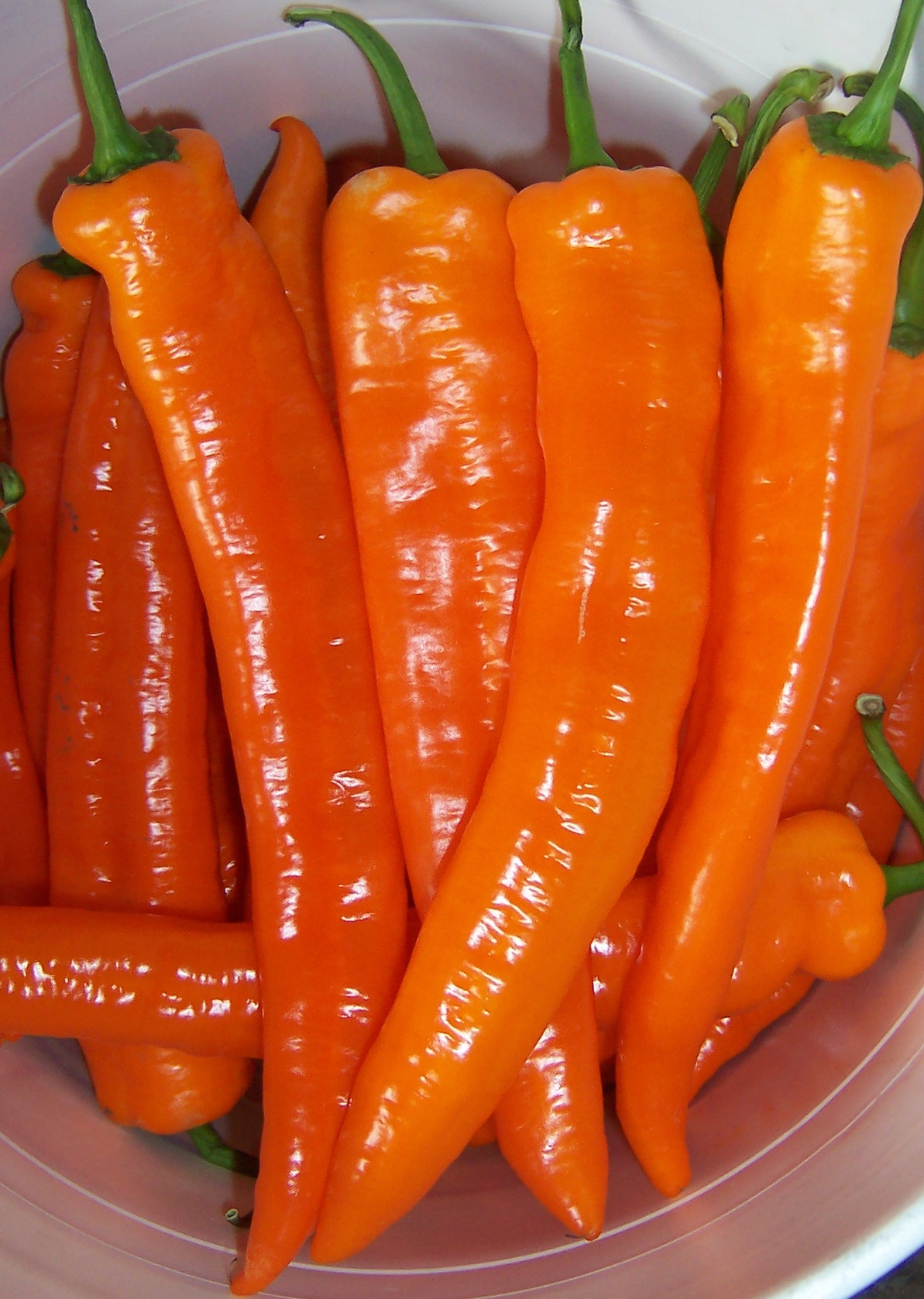 Sweet Peppers Solana Seeds