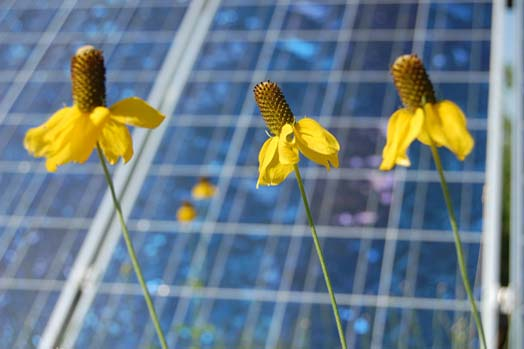 flowers and solar panels