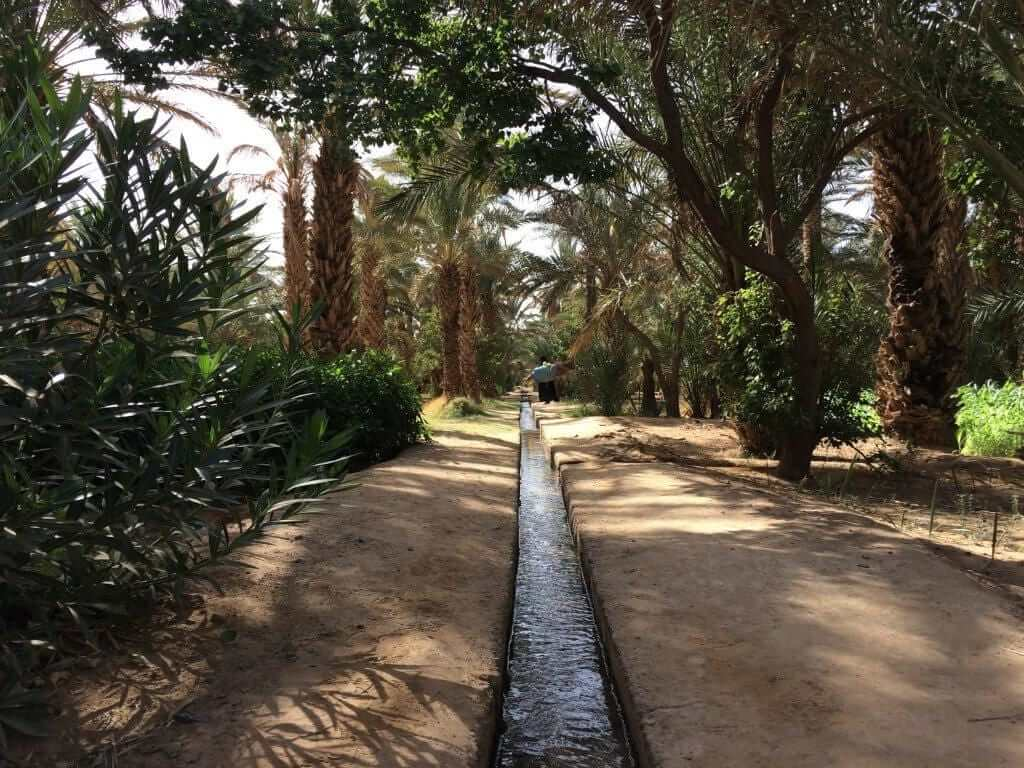 Oasis in Hassi Labied