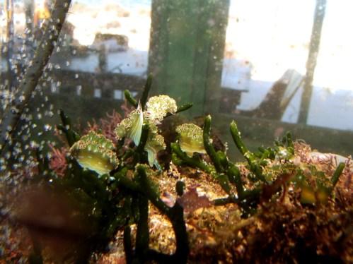 Some of the captive slugs, 7/8/16