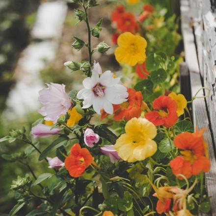 Blühpflanzen