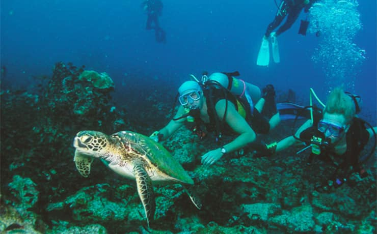 scuba divers underwater with a green sea turtle in Panama.