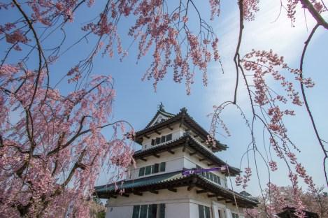 Chateau Hirosaki printemps ( Soleil Levant 75 )