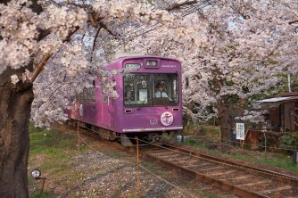 Kyoto, train, sakura ( Soleil levant 75 )