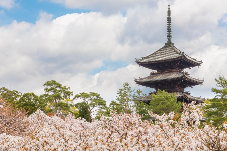 Ninna-ji , Kyoto ( Soleil Levant 75 )