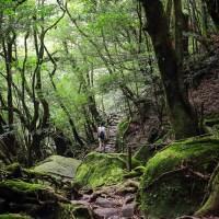 La forêt de Yakushima, une atmosphère fantastique..