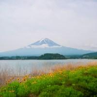 Kawaguchiko au début de l'été.