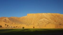 mesquite2