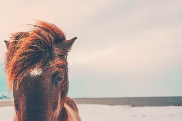 Was Du von Tieren lernen kannst...