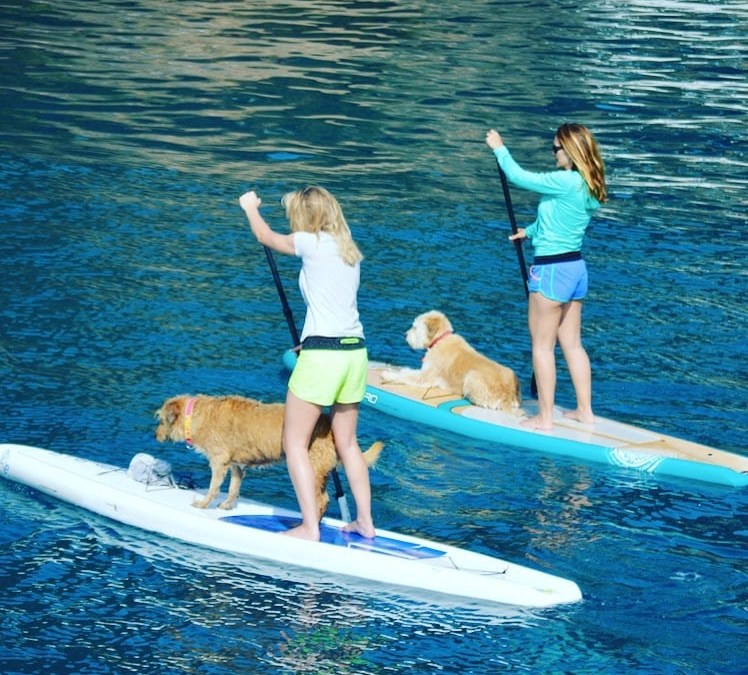 Paddle & Pooches