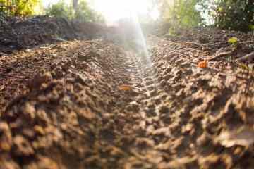 neumaticos trail 29er 1