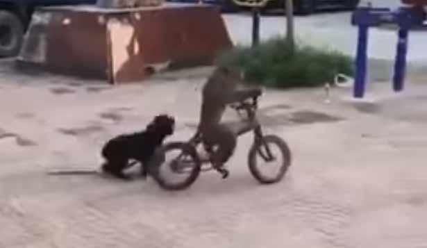 mono en bici