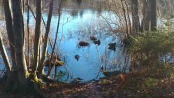 ducks-fp