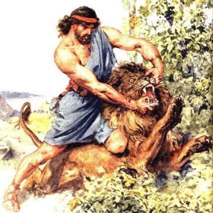 samson-illustration-lion