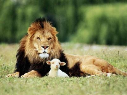 the_lion_and_the_lamb_wallpaper_3988d