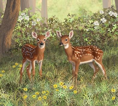 whitetail-deer-twin-fawns-crista-forest.jpg