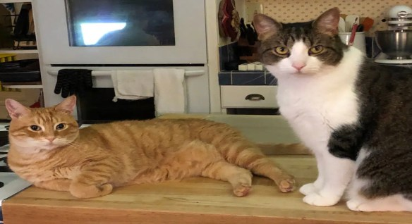 Two cats lounging in kitchen