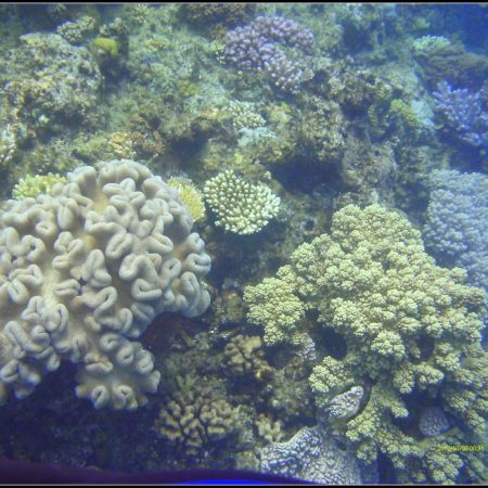 Diving at Great Barrier Reef (Cairns)