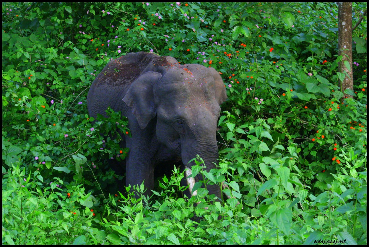 Wild animal encounters | A male tusker
