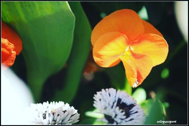 Photo Diary : Floriade or Floriat in Canberra