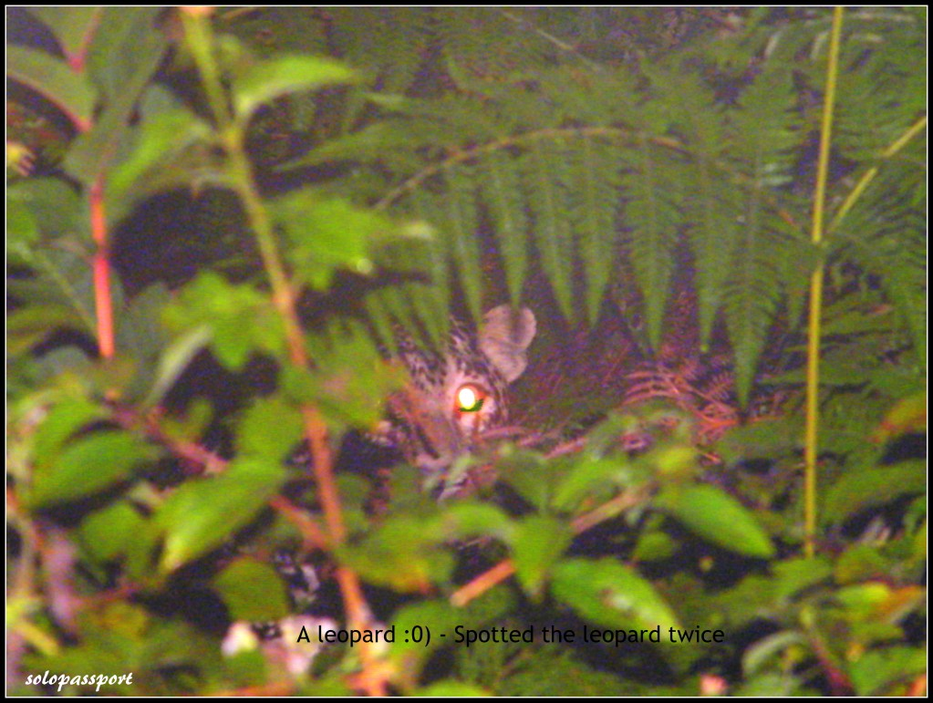 Panthera pardus/leopard in the Wild (BR Hills)