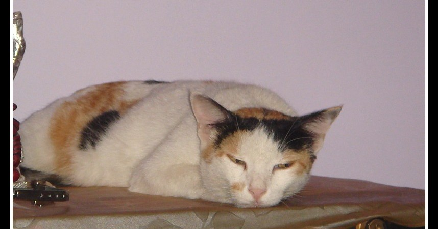 Chooti - Our beloved cat!
