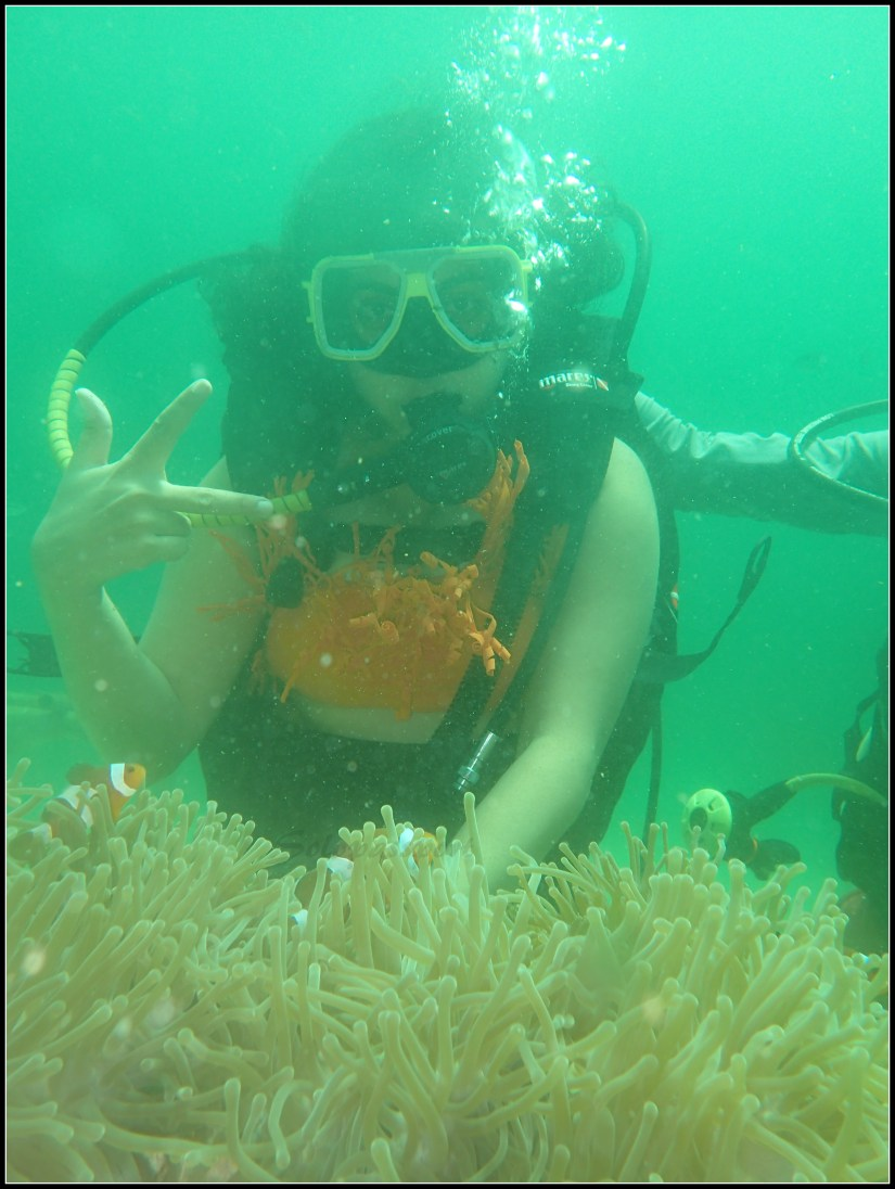 Fining Nemo in Pulau Payar