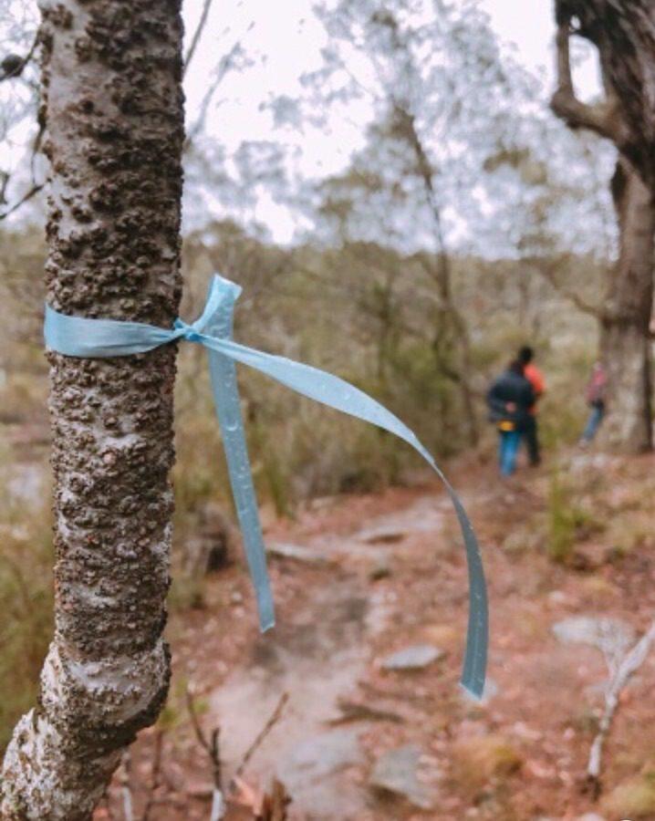 Blue ribbons in Mermaids Pool