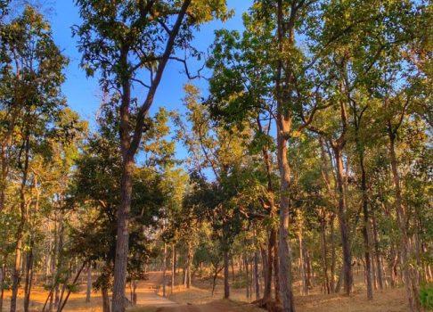 Safaris in Madhya Pradesh