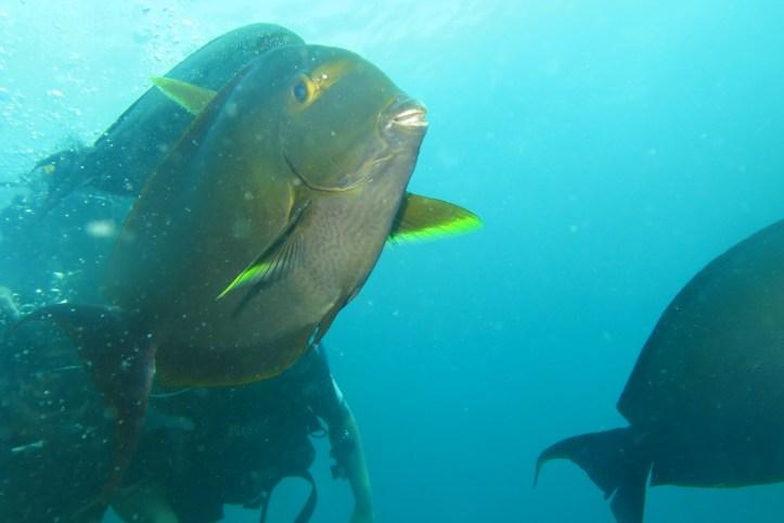 Wreck diving at Tulamben (Bali)