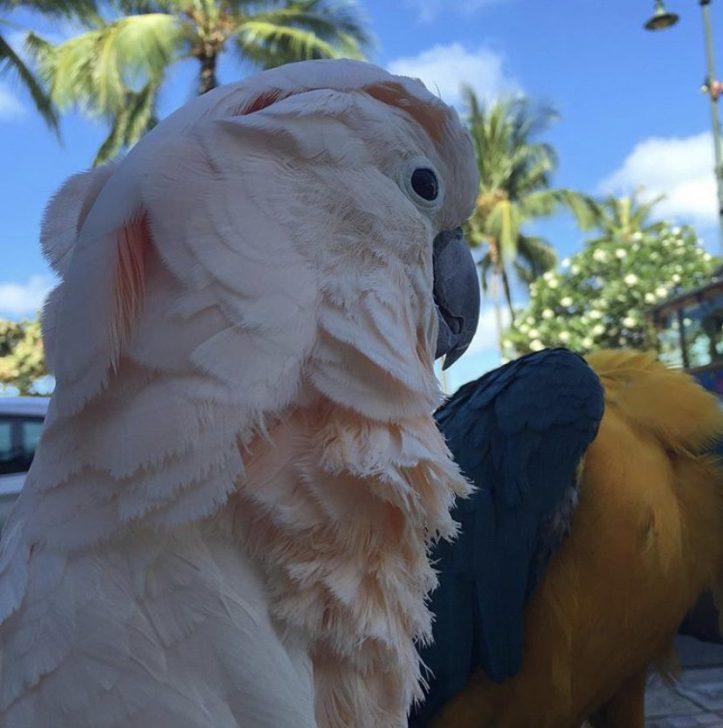4 days in Honolulu