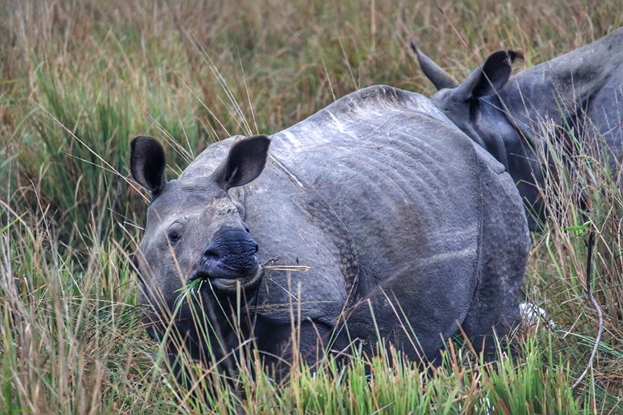 Rhino baby | Pobitora Wildlife Sanctuary
