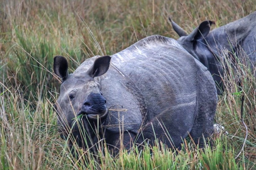 Rhino baby | Pobitora Wildlife Sanctuary