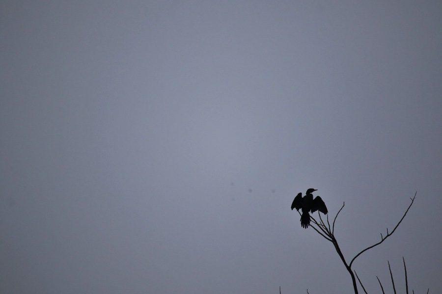 Travel Guide | Pobitora Wildlife Sanctuary (Assam)